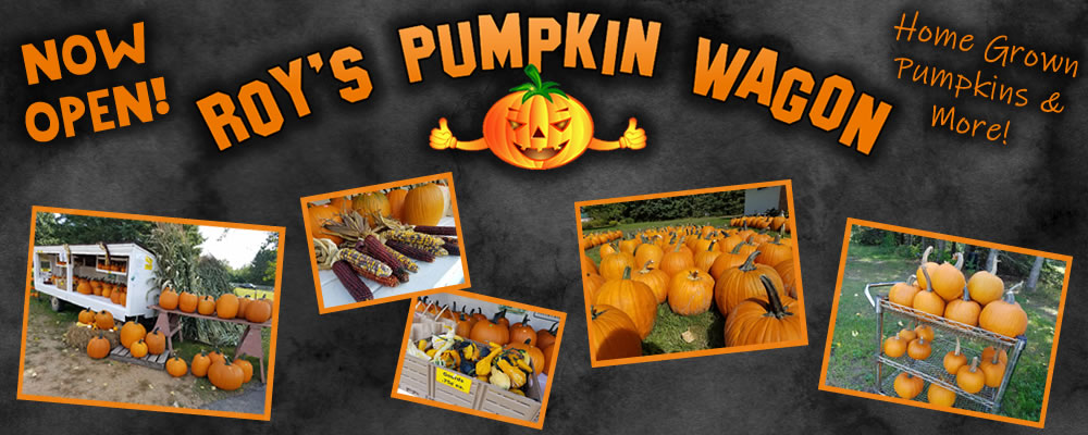 Roy's Pumpkin Wagon - Home Grown Pumpkins & More!